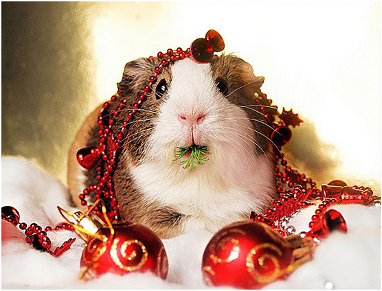 Counting Down to Christmas - Get Organised and Enjoy the Big Day